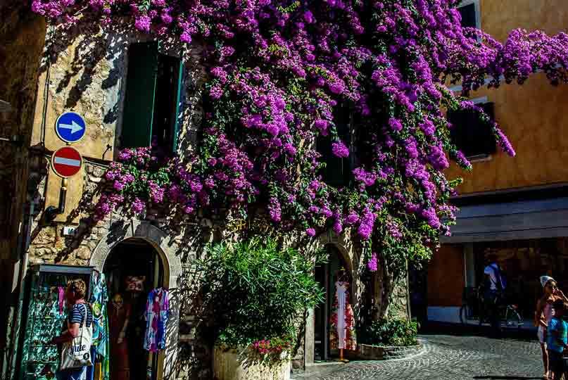 Лилавата къща / The purple house